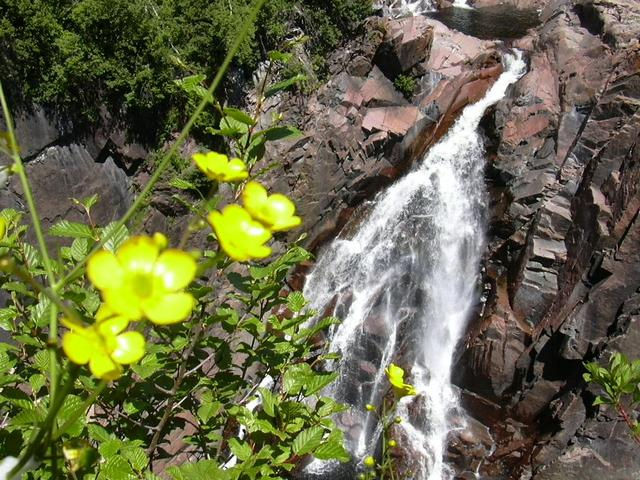 Flowers at Aguasabon River Gorge